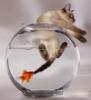 fishmama (Maria Kennedy)'s Avatar