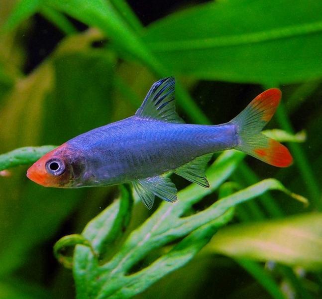 FishKeeperAtLast! (Alisa Midzic)'s Avatar