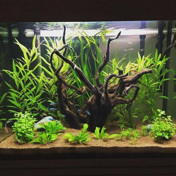 fishmad1234's Avatar