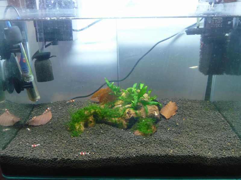 fishtank038.jpg