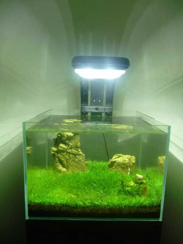 shrimp020.jpg