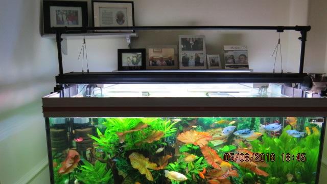 aquariumlight001.JPG