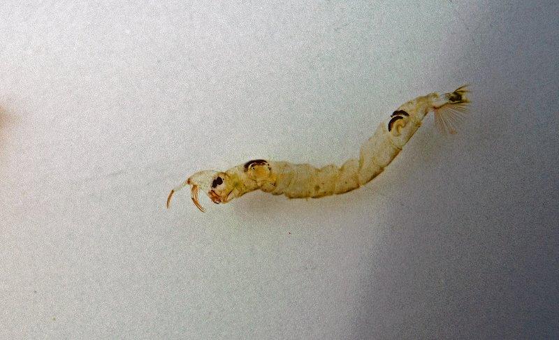 Glassworm1.jpg